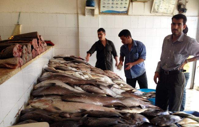 اسماك الحديدة: أكثرمن 5 مليارات ريال قيمة الصادرات السمكية خلال 9 شهور من العام الجاري
