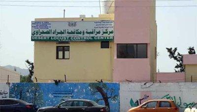 المركز مركز الجراد الصحراوي يحذر من خطورة الوضع الراهن للجراد على الثروة الزراعية