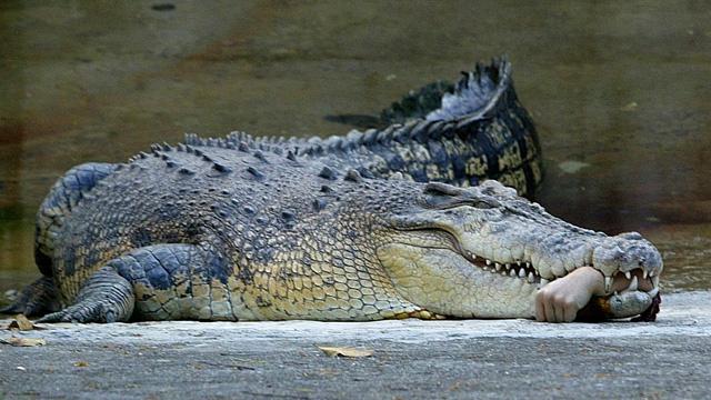 تمساح العثور على ما تبقى من سائح استرالي في معدة تمساح