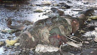 جريمه الناطق باسم الصحة : 115 شهيدا و610 جريحا حصيلة ضحايا مجزرة الصالة الكبرى