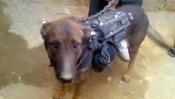 كلب طالبان تأسر كلباً برتبة عقيد في معركة عنيفة