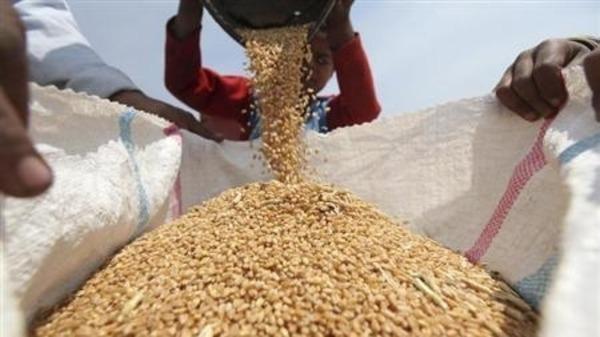 مصر9 وزير: مصر تسعى لخفض استيراد القمح بـ1.5 مليون طن