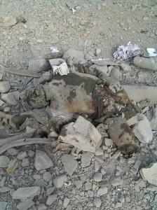 11836846 10155940722230445 7818783161001680070 n 2 224x300  بالصور   طيران التحالف السعودي يقصف تجمعاً للحوثيين في مديرية بيت الفقية وحيس بالحديدة