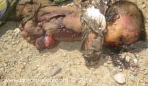 362 300x174 موقع  الحديدة نيوز  ينفرد بنشر صور أطفال يمنيين قتلى :: شاهدوا من قتلهم !