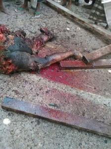unnamed 13 224x300 إستشهاد مواطن وإصابة 6 أخرين في مجزرة للعدوان السعودي على سوق السمك بخوخة الحديدة